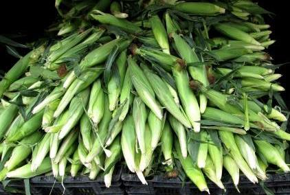 greenmarket corn