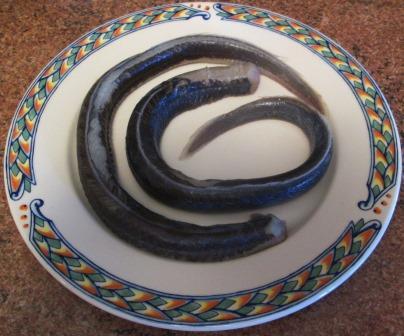 Eels 1